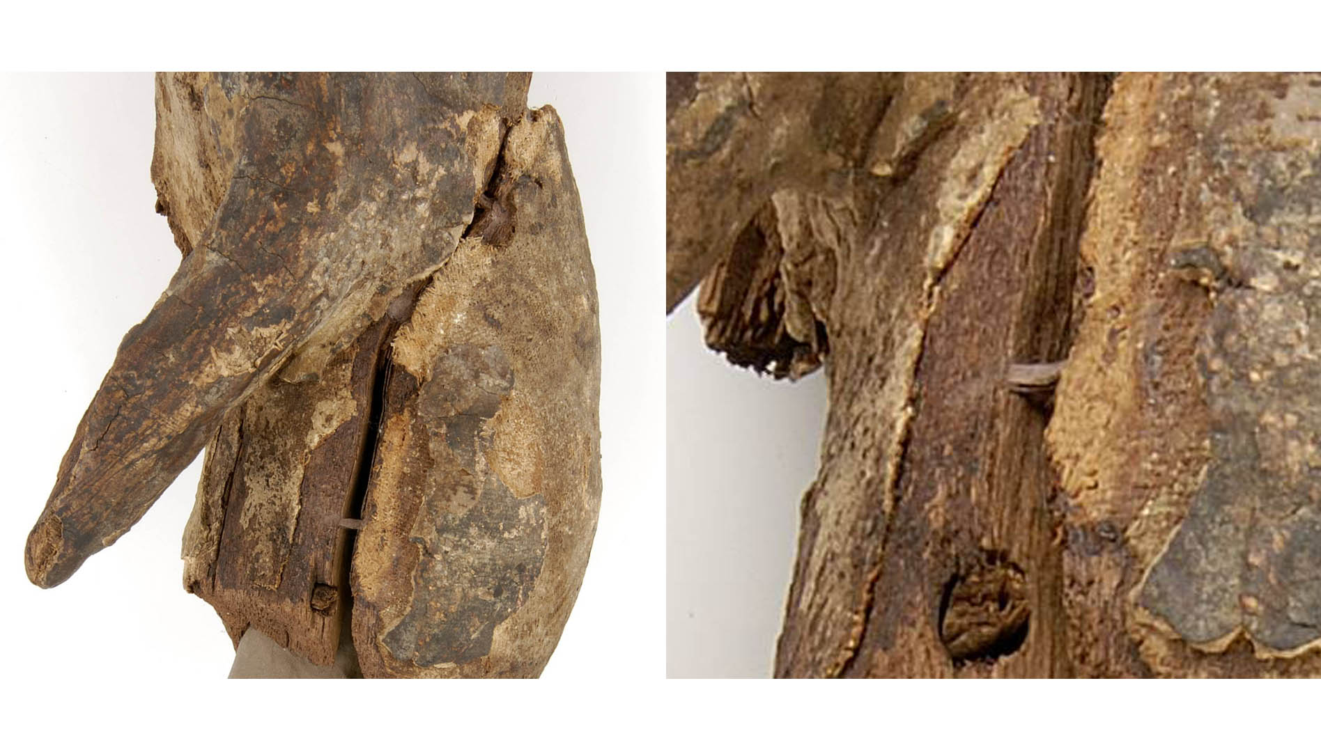 fig 10. Having dried up the hardened 'bridges' would help to keep the edges of wood together.