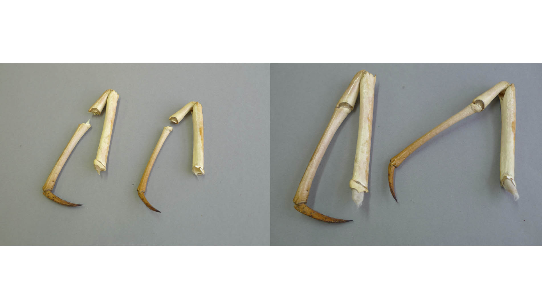 fig 39. Japanese paper tubes were inserted into the legs and these helped to set the legs together. They were supported on the top with veil paper and the result was satisfactory – a strong, stabile and in-noticeable joint.